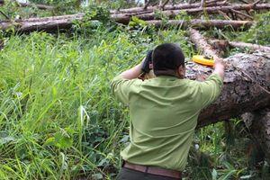 Khởi tố nhân viên Ban Quản lý rừng do không báo cáo rừng bị phá hoại