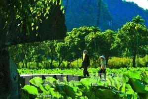 Mùa sen ở chùa Bích Động (Ninh Bình) - vẻ đẹp khó cưỡng