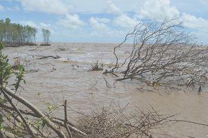 Cà Mau: Áp lực mất đất, mất rừng do xói lở bờ biển