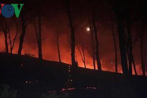 Cháy lớn trên rừng thông nghi do đốt thực bì