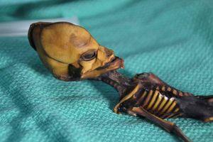 Bí ẩn bộ xương 'người ngoài hành tinh' đã có lời giải