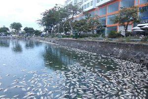 Đà Nẵng: Rò rỉ nước thải, hàng tấn cá chết nổi trắng hồ