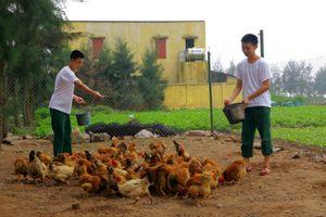 Hiệu quả từ chủ trương tạo nguồn thực phẩm tại chỗ