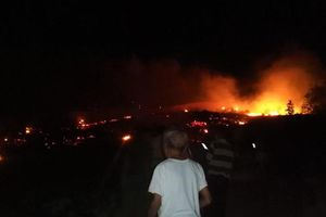 Cháy rừng ở Hà Tĩnh, gần 1ha thông đang cho khai thác bị thiêu rụi trong đêm