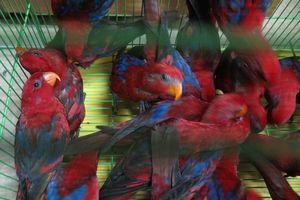 322 con vẹt quý bị thu giữ trên chuyến bay về Việt Nam
