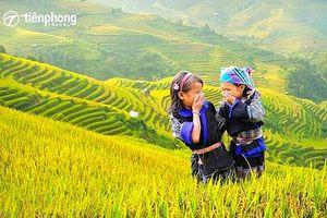Trải nghiệm mùa lúa chín Mù Cang Chải cùng Tiên Phong Travel