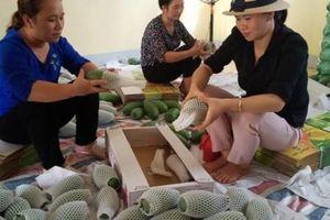 Ngày 20/6, 3 tấn xoài tượng da xanh Sơn La chính thức sang Anh