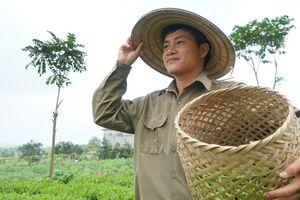 Cử nhân trường báo nhất quyết về quê trồng chè bán mỗi kg gần 10 triệu