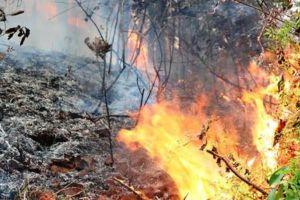 Đốt nương làm rẫy, cụ ông 88 tuổi ở Đà Nẵng chết cháy