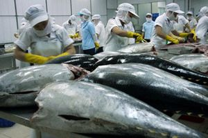 CPTPP: Đột phá cho xuất khẩu cá ngừ tương đối nhỏ