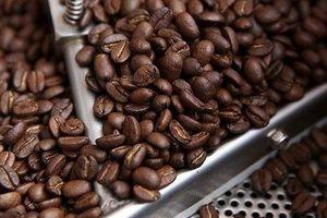 Giá cà phê hôm nay 19/6: Tiếp tục giảm thêm 300 đồng/kg
