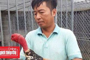 Bỏ việc Nhà nước, về quê nuôi gà 'đánh võ'