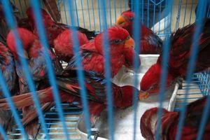 Xác định tên người gửi 322 con vẹt quý trên chuyến bay về Việt Nam