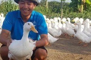 Nam Định: Nuôi vịt to xác, bán chạy như tôm tươi, thu tiền tỷ/năm