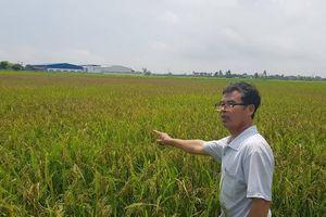 Quỳnh Phụ - Thái Bình: Gia đình nông dân 'tố' xã làm mất ao, thiếu ruộng