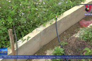 Công trình thủy lợi tiền tỷ gãy nứt sau mưa lớn