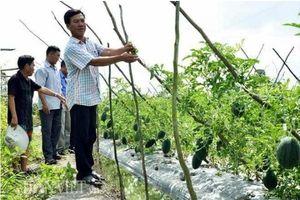 Kiên Giang: Đảm bảo an toàn thực phẩm trong lĩnh vực nông nghiệp