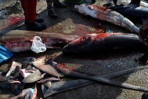Canada trở thành quốc gia G20 đầu tiên cấm buôn bán vây cá mập