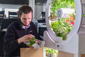 Vườn rau mini OGarden Smart, không cần chăm sóc vẫn có rau sạch ăn