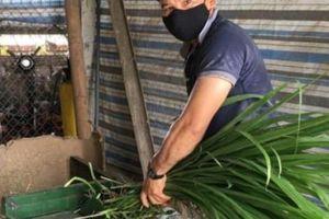 Thanh Hóa: 'Chiêu' băm cỏ trộn cùng cám gạo giúp gà đẻ tránh nóng