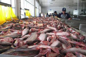 Cơ hội cho cá tra vào thị trường Trung Quốc
