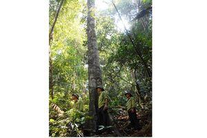 Hàng chục nhân viên bảo vệ rừng ở Quảng Bình bỏ việc vì lương thấp, áp lực cao