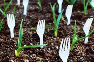 Lấy dĩa nhựa cắm đầy vườn rau, ai cũng nghĩ 'hâm'nhưng nghe lý do thì ngã ngửa