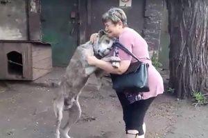 Lạc chủ 2 năm, chú chó khóc ôm chầm chủ ngày hội ngộ