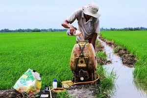 Nhập khẩu thuốc trừ sâu và nguyên liệu từ Trung Quốc tăng mạnh