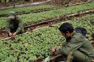 Yêu cầu kiểm điểm trách nhiệm đối với dự án Sâm Ngọc Linh
