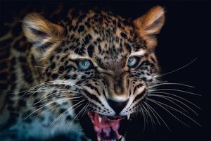 Bộ ảnh động vật tuyệt đẹp như đang tạo dáng trước ống kính
