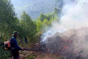 Nghệ An: Gần nghìn người trắng đêm dập lửa cứu 15ha rừng thông 15 tuổi