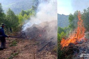 900 người trắng đêm chữa cháy rừng thông 15 tuổi ở Nghệ An