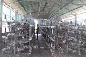 Hà Tĩnh: Xây lầu cho chim ở, mỗi tháng bỏ túi hơn 20 triệu đồng