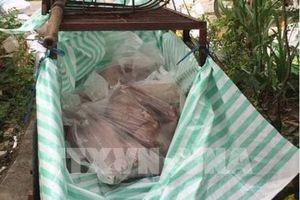 Kon Tum phát hiện thêm ổ dịch tả lợn châu Phi mới