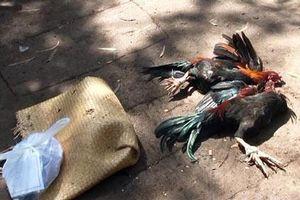 Xử lý ra sao nhóm thanh, thiếu niên cướp 8 con gà?