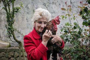 Cả nước Pháp đang tranh cãi về quyền gáy của một con gà trống