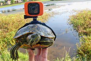 Đây là những gì GoPro ghi lại được ở trên lưng một con rùa