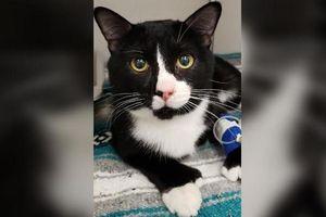 Mèo 'cao số' sống sót dù bị quay 30 phút trong máy giặt