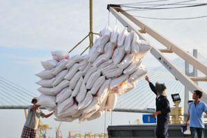 Thị trường xuất khẩu gạo vẫn bó hẹp dù lượng doanh nghiệp tăng mạnh