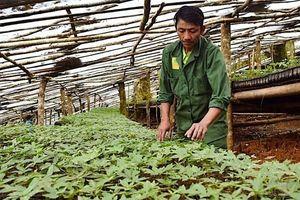 Thanh tra Chính phủ kết luận nhiều sai phạm tại dự án Sâm Ngọc Linh