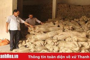 Nỗ lực đưa cây cói Nga Sơn đến các thị trường quốc tế