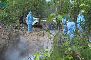 Tiêu hủy 1.200 con nhiễm dịch tả lợn Châu Phi ở Gia Lai