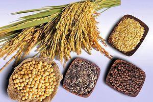 Giống nông sản phải gắn với kinh tế thị trường