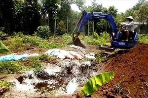 Bình Phước sẽ tạm dừng cấp giấy phép chăn nuôi
