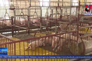 Hỗ trợ khách hàng vay vốn bị thiệt hại bởi dịch tả lợn châu Phi