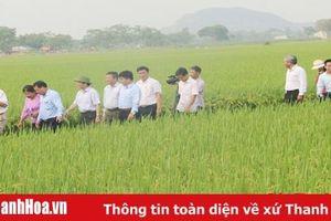 Hiệu quả của mô hình ứng dụng gói kỹ thuật canh tác tiên tiến trong sản xuất lúa