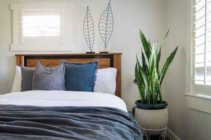 Loạt cây lọc sạch không khí, trồng trong nhà giúp bạn dễ chịu, ngủ ngon