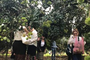 Sinh viên Lào và Campuchia hào hứng trải nghiệm miệt vườn Bình Phước