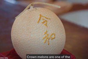 Hai quả dưa lưới Nhật hơn 1 tỷ đồng được trồng như thế nào?